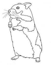 Coloriage magique hamster  1001 Animaux