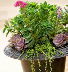 384 best landscaping u0026 gardening images on pinterest shade