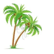 palm trees with shadow isolated on white vector illustration