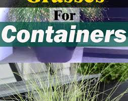 ornament best ornamental grasses for containers growing ornamental