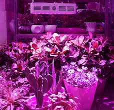 used led grow lights for sale home lighting homeing grows for sale walmartgrow ebay led cheap