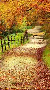 62 best fall in all its glory images on pinterest fall autumn