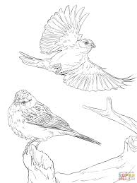 sparrows coloring pages free coloring pages