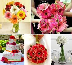 Ideas For Gerbera Flowers Charming Ideas For Gerbera Flowers Best Ideas About Gerbera