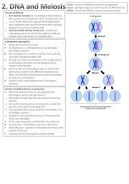 as u2013 biology nickmynotes