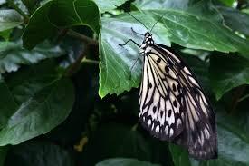 summer the butterfly place mumturnedmom