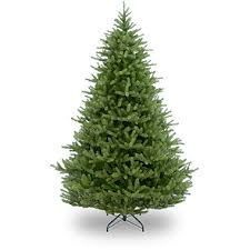 real christmas trees your own real christmas tree stoke on trent staffordshire