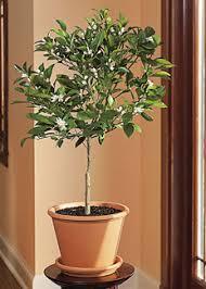 Indoor Vegetable Container Gardening - container gardening tips growing vegetables u0026 edible plants