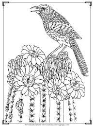 free coloring pages of birds coloring page of birds space coloring pages space coloring