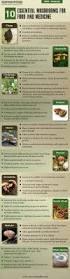 best 25 mushroom cultivation ideas on pinterest oyster mushroom