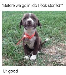 Stoned Dogs Meme - before we go in do i look stoned ur good meme on me me
