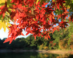 autumn color in japan id 50169 u2013 buzzerg