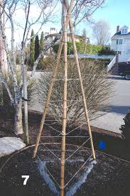 how to build a bamboo tri pod trellis a photo tutorial u2014 seattle