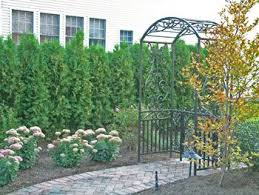 Small Backyard Trees by 65 Best Privacy Plants Images On Pinterest Privacy Plants