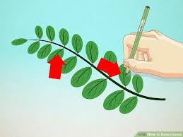 how to draw leaves 15 steps with pictures wikihow
