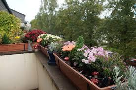 herbstbepflanzung balkon übergangsbepflanzung herbstbepflanzung 2015 green planet
