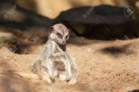 Bad Day At Work Meme - depressed animal bad day at work for a lonely tired meerkat