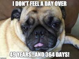Happy Birthday Pug Meme - happy 50th birthday imgflip