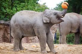 dublin zoo broadsheet ie