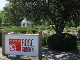 richmond rose garden experiencing life in full bloom