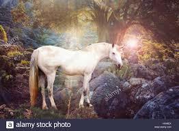 unicorn realistic photography stock photo royalty free image