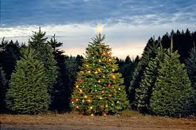 Pacific Northwest Christmas Tree Association - o tannenbaum portland monthly