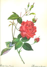 china with roses chopin with cherries on chopin s roses for s day vol