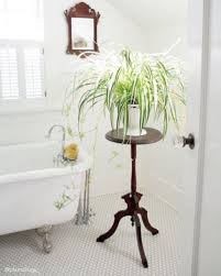 best indoor plants for bathrooms interior design inspo tree