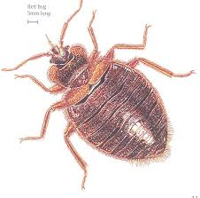 One Bed Bug Bed Bug Blues Pretty Natural