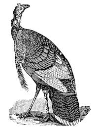 thanksgiving clip art thanksgiving black and white vintage thanksgiving clip art turkeys