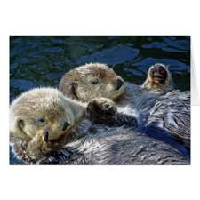 otter cards greeting photo cards zazzle