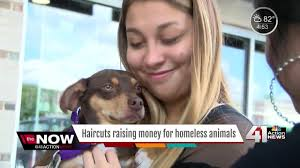 haircuts raise money for homeless animals youtube