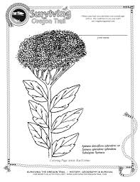 coloring pages archives surviving the oregon trail