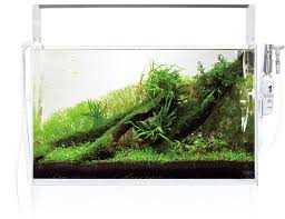 Aquascape Layout Ada Nature Aquarium Nature Aquarium Starting From Zero