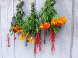 Easy Herbs To Grow Inside by How To U201cherbify
