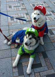 Funny Animal Halloween Costumes 25 Animals Costumes Ideas Dogs