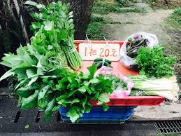 urban vegetable garden u2014 the crazy adventures of the oes