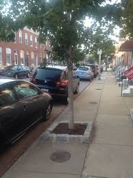 why we need a tree guard permit in nyc