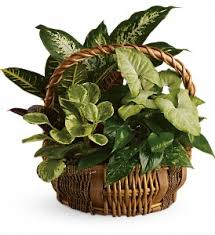 funeral plants emerald garden basket flanner buchanan