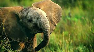 beautiful elephants pictures free download free wallpapers