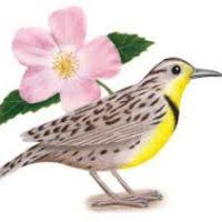 state bird of south dakota south dakota state flower page 2 flowers ideas for review