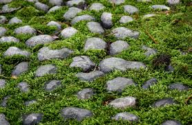 landscape fabric alternatives warm area grass alternatives u2013 what are some lawn substitutes for