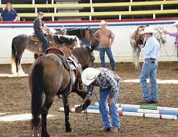 mustang adoption mustang blm mustang makeover bring horses for adoption