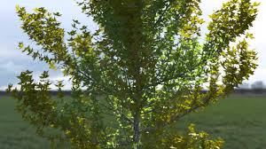 animated tree with wind and blowing leaves