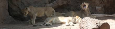 reid park zoo closing early this week due to soaring temperatures