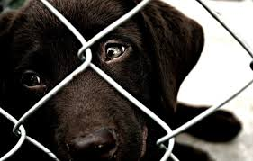 Which State Has The Most Dog Owners Per Capita According To 2016 Stats 12 Alarming Facts About Pet Homelessness One Green Planet