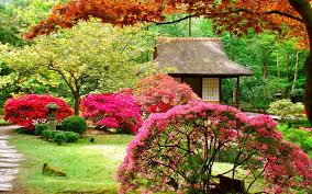 how to arrange a japanese garden choosing the right plants home