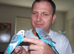 28 Light Blue And White Sky Blue Parakeet Died Friday August 5 2011