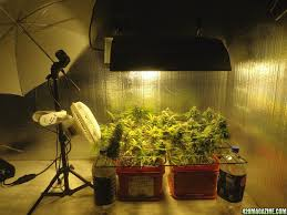 weed scene setup perfect interior small grow room setup