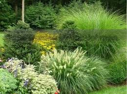 230 best gardening with grasses images on